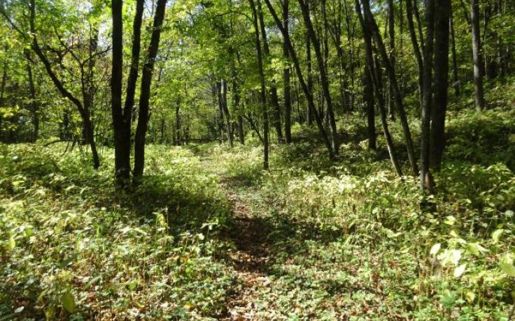 Trail at Romance Woods